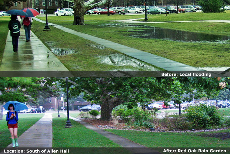 Red Oak Rain Garden Image